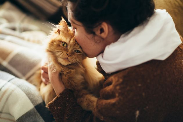 Cats Can Spread Covid. Here's What We Know