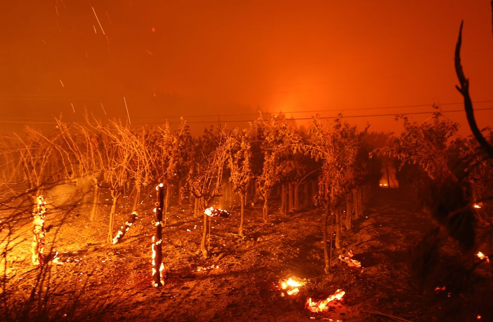 Grapevines at St. Helena's Chateau Boswell Winery burn on Sunday.