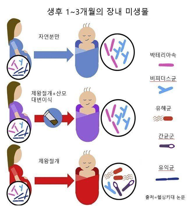 생후 1~3개월 장내 미생물