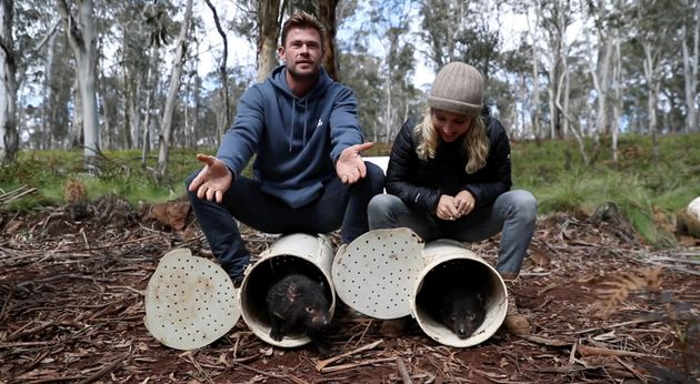 Chris Hemsworth and wife Elsa Pataky react as they release Tasmanian devils into the wild at Barrington...