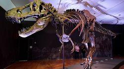 T-Rex da record all'asta da Christie's a New