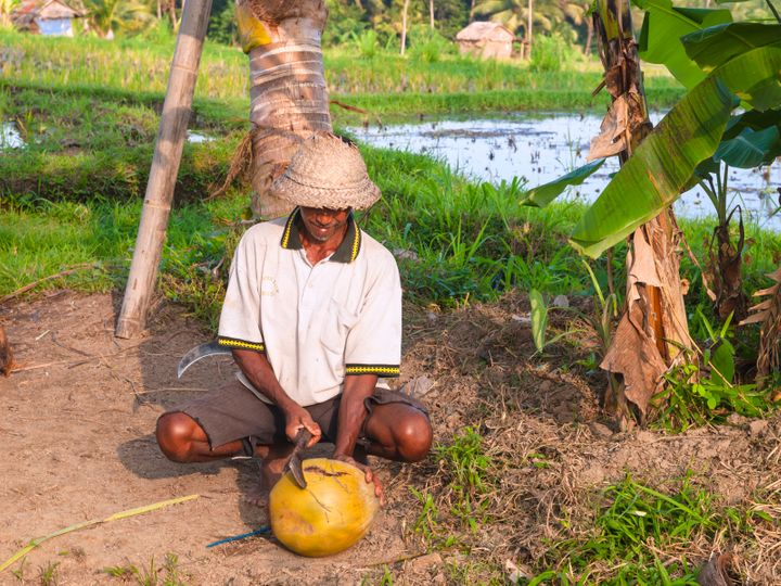 A coconut farmer works on his farm in Ubud, Indonesia.