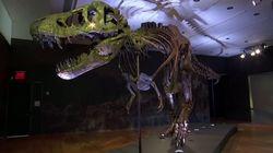 El T. Rex Stan se convierte en el fósil de dinosaurio más caro vendido hasta el
