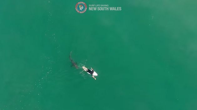 Drone Footage Shows Champion Surfer Matt Wilkinson's Incredible Shark