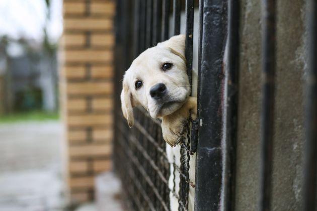 Κακοποίηση ζώων και Κοινωνική