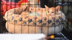"""Le chat classé """"animal nuisible""""? Ce député défend son amendement"""