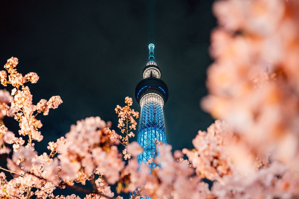 Cherry Blossom and Sakura with Tokyo SkyTree in Japan.