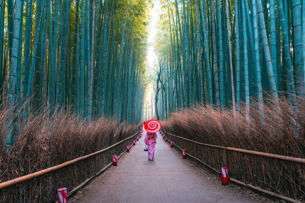 Woman with traditional kimono dress and umbrella walking along the pathway in the bamboo forest of Arashiyama, Kyoto prefecture, Japan.