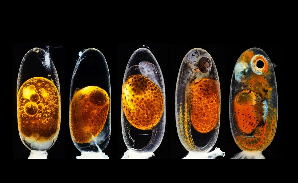 These Award-Winning Photos Of The Microscopic World Will Blow Your