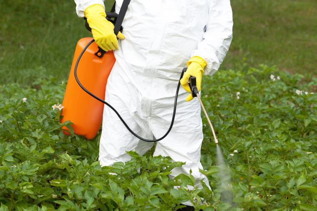 L'Anses restreint les usages agricoles du glyphosate (photo