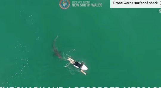 マット・ウィルキンソンさんに接近するサメ