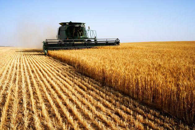 Quatrième exportateur de blé au monde, l'Argentine veut vendre une variété...