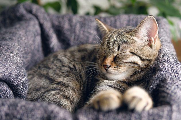 A relaxed tabby cat sleeps on a blanket.