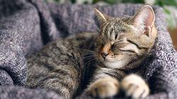 """猫との絆は""""ゆっくりと瞬き""""すると強められる。最新研究で明らかに"""