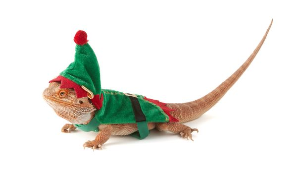 It's an age-old story: The family is enjoying the holidays all decked in holiday gear while the beloved bearded dragon gets l