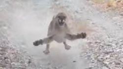 Hiker Films Terrifying 6-Minute Cougar Chase: 'Thought I Was Done
