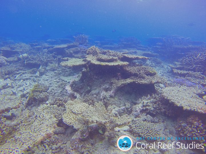 The Great Barrier Reef suffered mass coral bleaching events in 2016, 2017 and 2020.