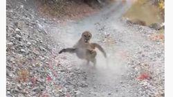 怒ったピューマに、ハイキング中の男性が6分間追跡される。「もう終わりかと思った」