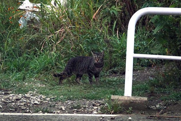 最近、河原にキャリーケースごと捨てられていた猫