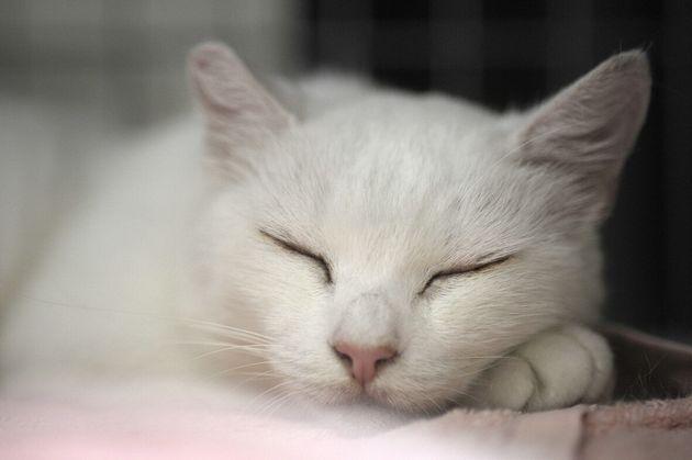 多摩川河川敷で暮らしていた野良猫「シロ」。子猫の時に捨てられたシロは、普段は近くのマンション群の隙間にある小さな公園で暮らし、時折河川敷を訪れていたという。太田さんによって引き取られ、2017年に15歳で亡くなった。頭が良くて、とても人懐っこい猫だったという。