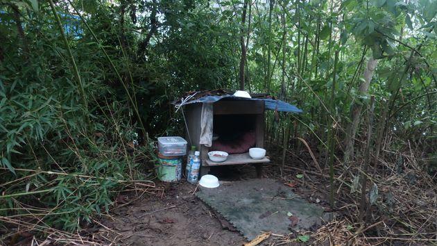 多摩川河川敷の茂みに、ボランティアやホームレスが猫のために作った小屋