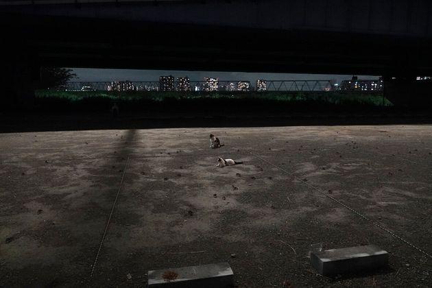 多摩川河川敷の猫たち