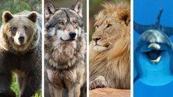 Orso, lupo, leone o delfino? Quanto e come dormi ti può aiutare ad avere successo nel