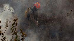 Receita de Salles para proteger o Pantanal inclui boi bombeiro, fogo e produtos