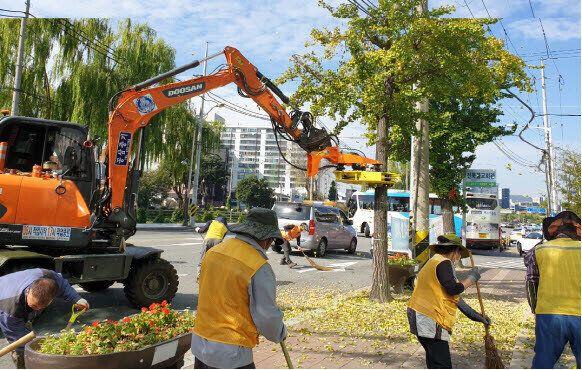 전주시 도로변에 떨어진 은행나무 열매와 낙엽을 치우는 모습.