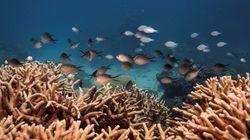 La Grande Barriera Corallina ha perso metà dei suoi coralli negli ultimi 30