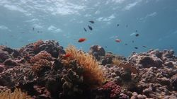 La moitié de la Grande Barrière de corail a disparu et il n'y a qu'une chose à