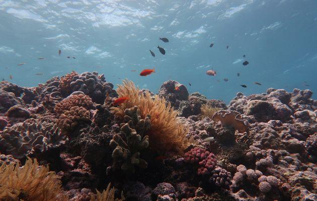 Une photo non datée de la Grande Barrière de corail en