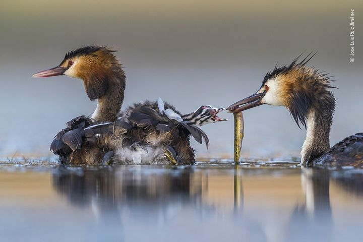 (Jose Luis Ruiz/Wildlife Photographer of the Year 2020/PA)