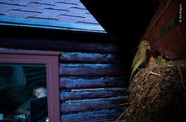 ロッキー山脈、ロッキアキノドメジロハエトリ