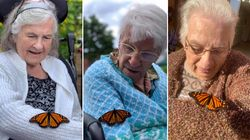 Butterflies Released At Ontario Nursing Home A 'Story Of Hope' For