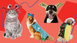 These Pet Halloween Costumes For Dogs And Cats Are
