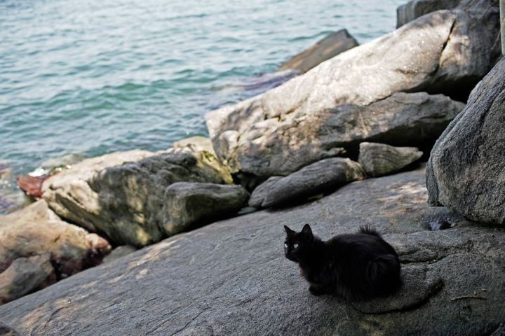 A cat sits on a rock overlooking the water on Furtada Island.