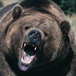 Εργαζόμενος ζωολογικού κήπου σκοτώθηκε από αρκούδες μπροστά στα μάτια