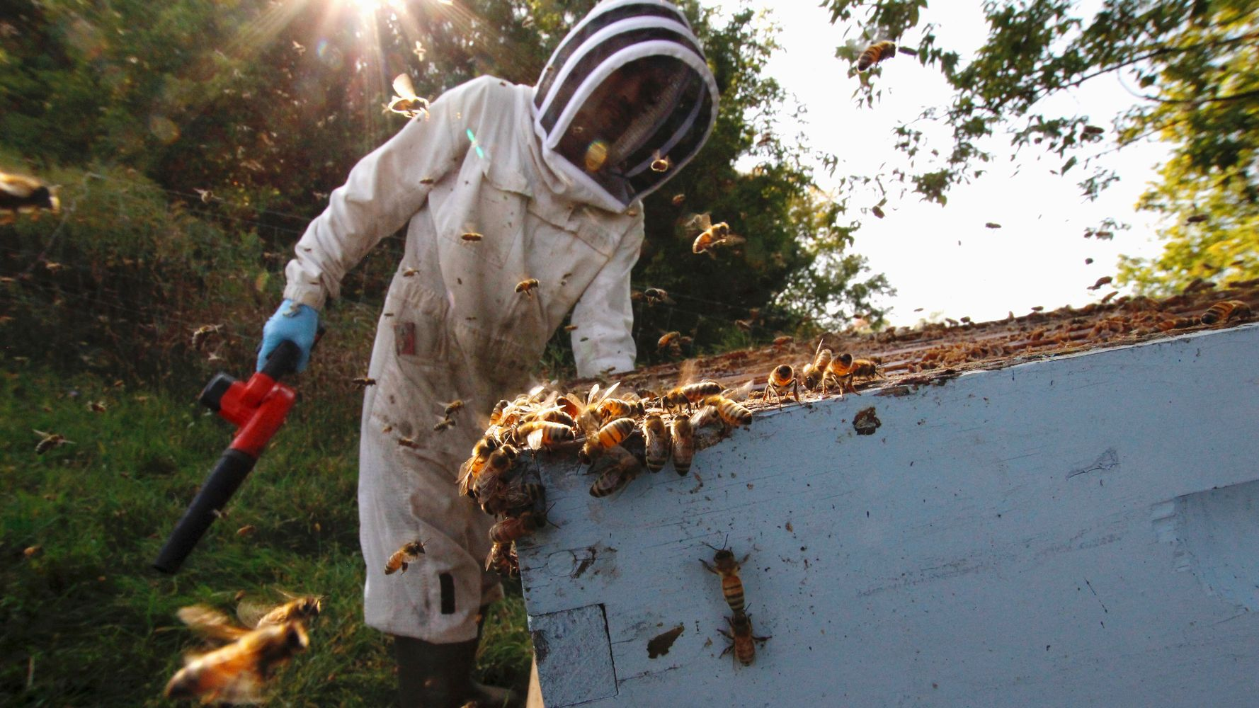 Beekeepers Determined To Avoid Getting Stung By Pandemic Shutdowns