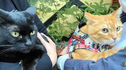 美術館に入りたい2匹の猫VS警備員。茶トラのゴッちゃんと戦友のケンちゃん、久々に再会するも意外な結果に。