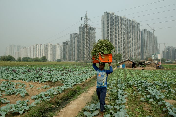 A farmer carrying a bunch of leafy radish in a basket on his head.