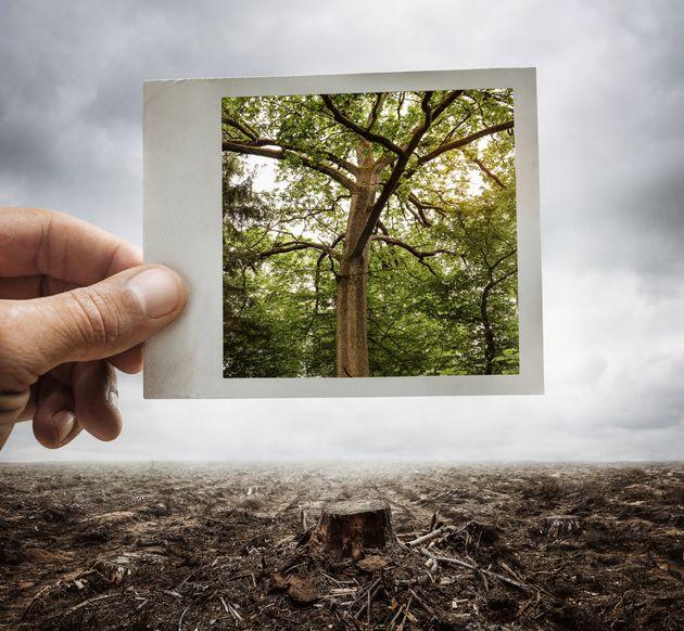 Servono urgenti misure legislative per arrestare deforestazione e distruzione degli