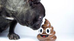 Si tu perro se come la caca, puede que tenga un problema de