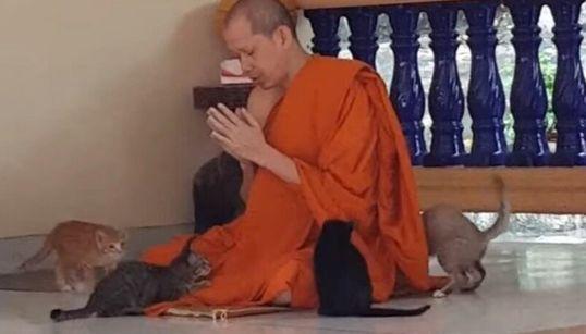 「完全に煩悩を消し去っている」タイの僧侶の動画が拡散。体の上で4匹の子ネコがジャれ合っても祈り続ける