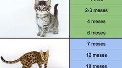 Cuál es la equivalencia entre la edad de un gato y la edad