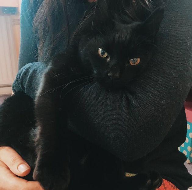 Mo the cat