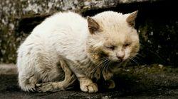 母猫に熱湯かけ殺す...「動物虐待を禁止する法律を」中国で怒り広がり、コメント13万件超える