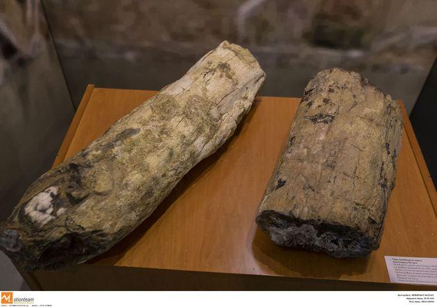 Μουσείο Φυσικής Ιστορίας Απολιωθμένου Δάσους