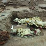 Ces momies de lamas offrent un témoignage historique des pratiques