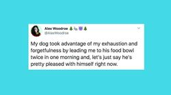 31 Of The Funniest Tweets About Cats And Dogs This